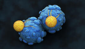 Cancer Cell attacked by Killer T-Lymphocyte
