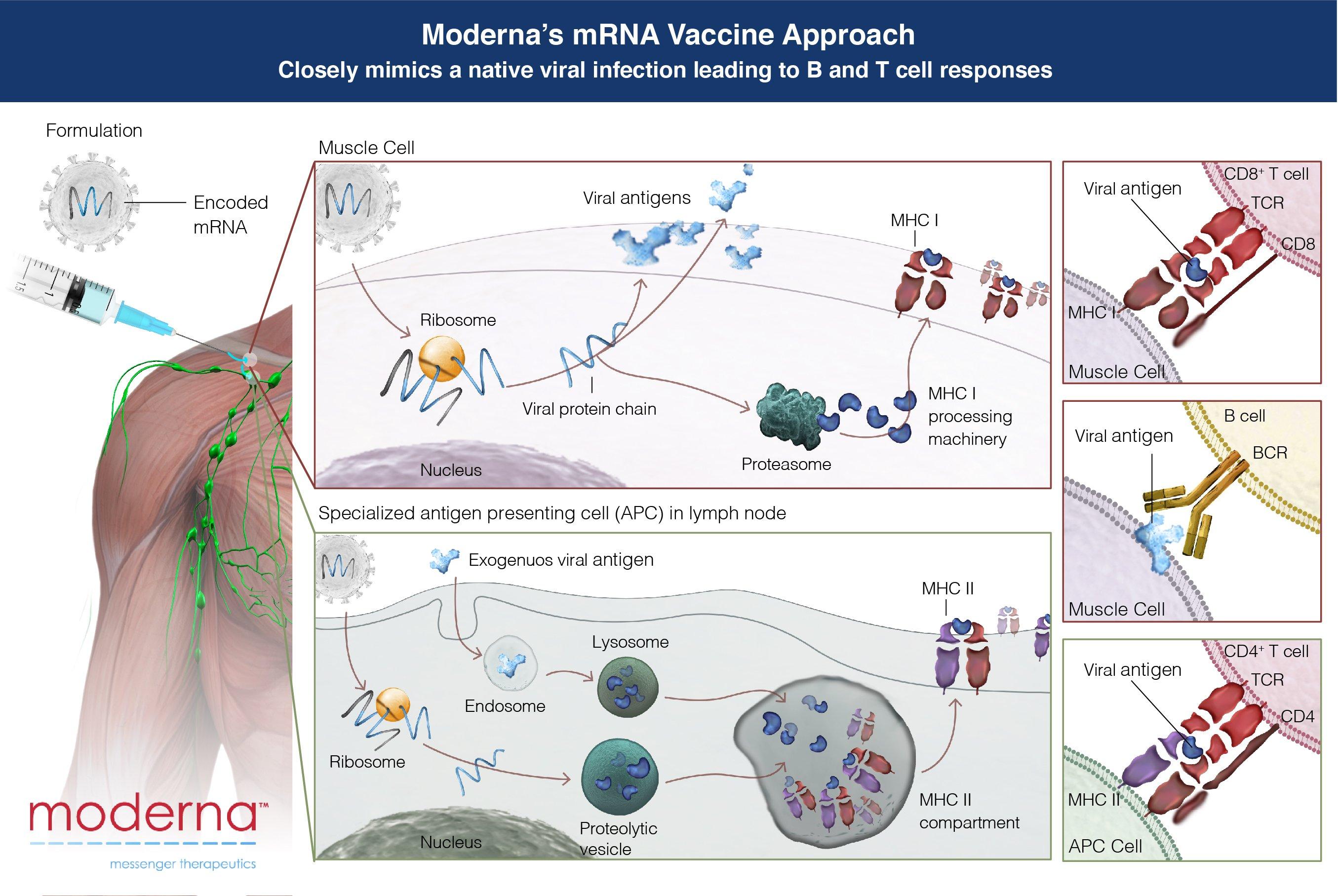 moderna-mrna-vaccine-approach-covid-19-vaccine