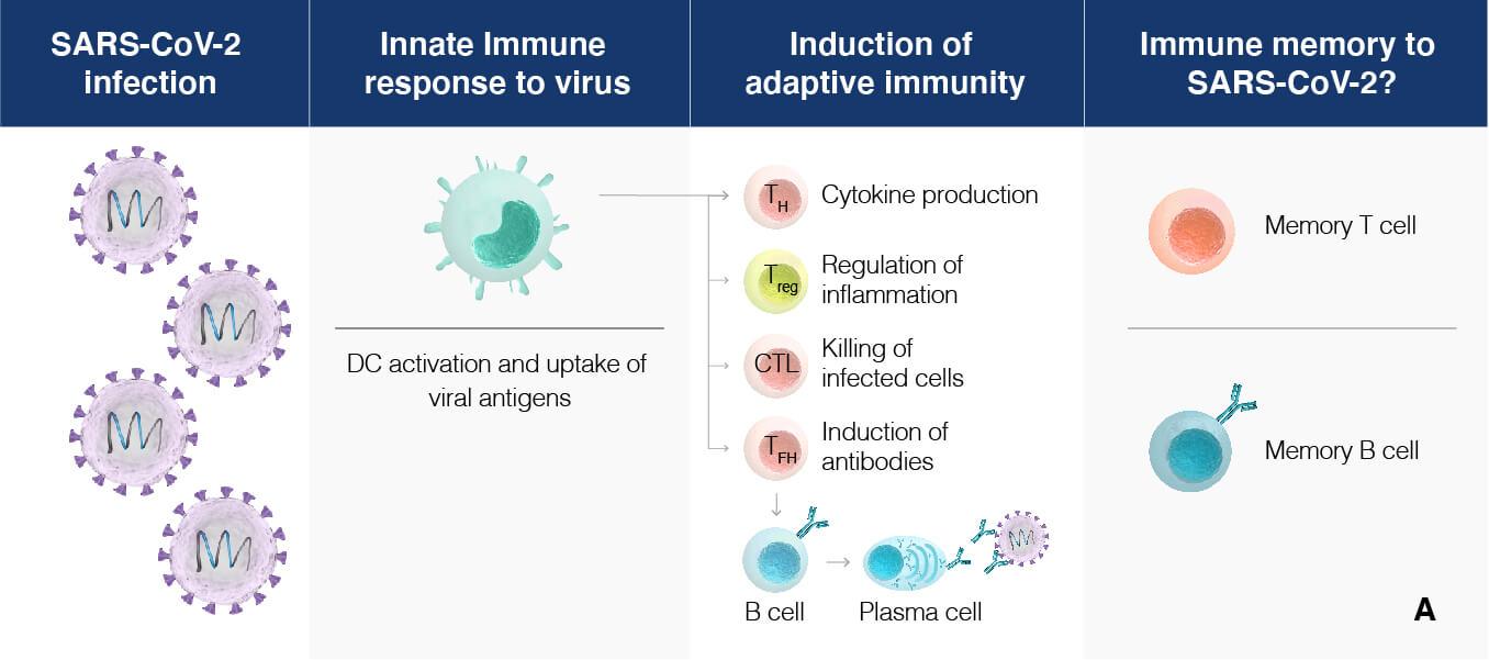 vaccine-efficacy-explained